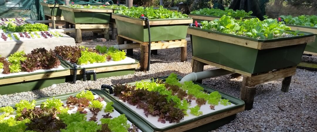 DIY Aquaponics Kits