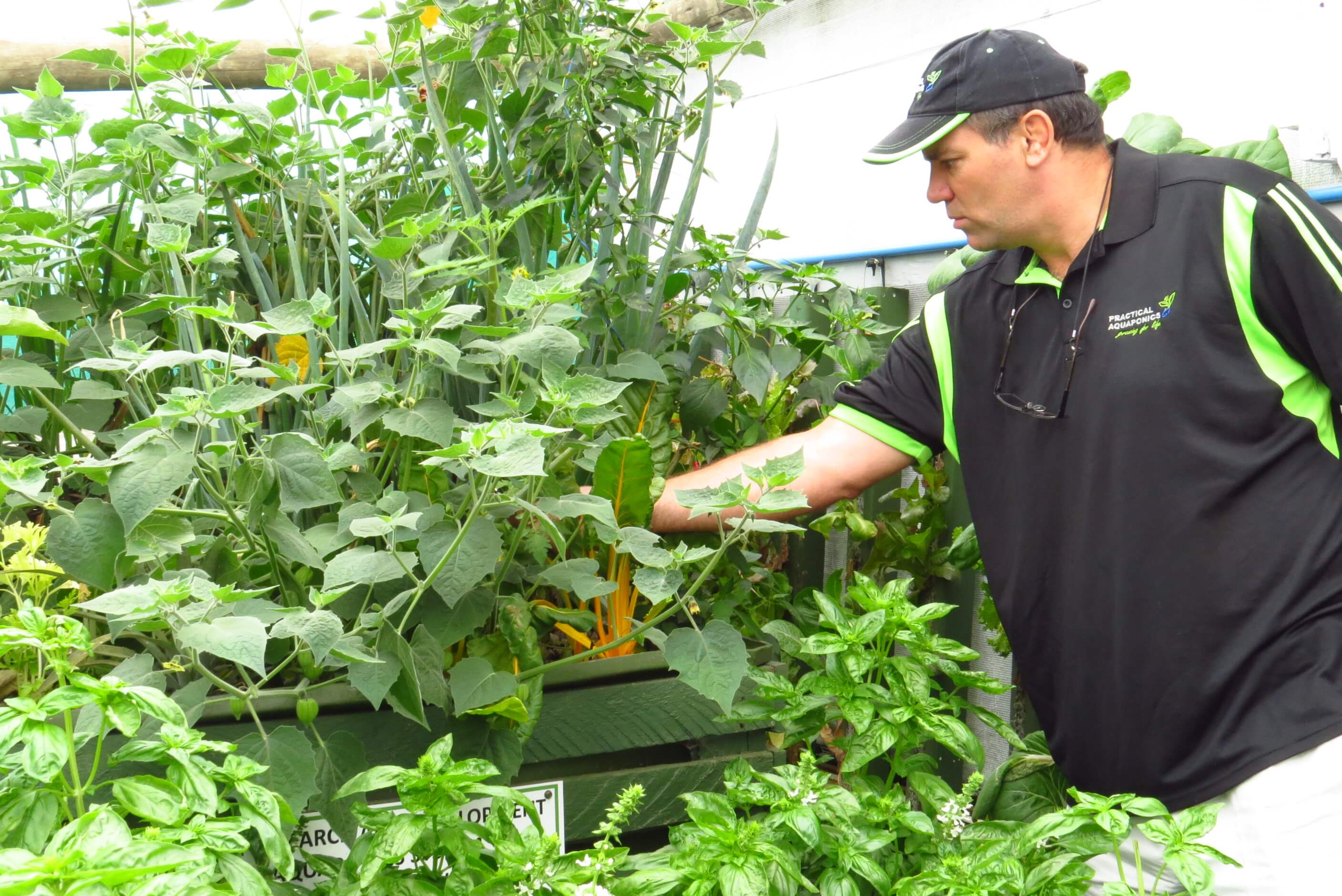Aquaponics Media Beds In Action